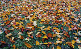 fall-leaves-on-ground
