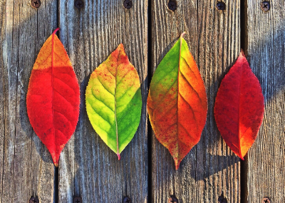 fall-leaves-red-green-yellow